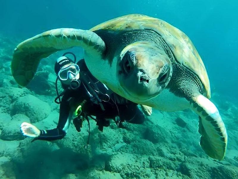 diving-na-tenerife-003