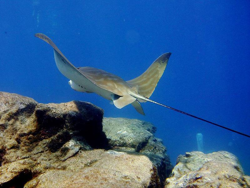 diving-na-tenerife-005