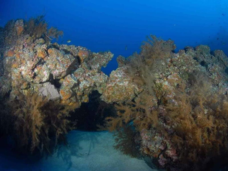 diving-na-tenerife-007