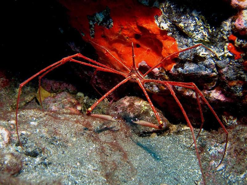 diving-na-tenerife-008
