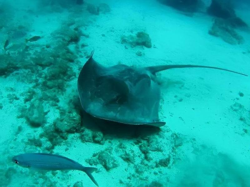 diving-na-tenerife-011