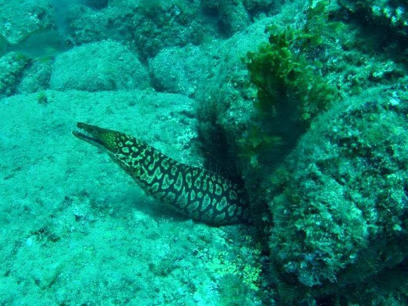 diving-na-tenerife-012