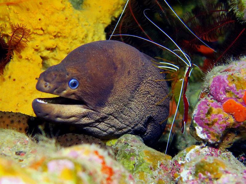 diving-na-tenerife-015
