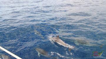 Дельфины на Тенерифе, морская прог