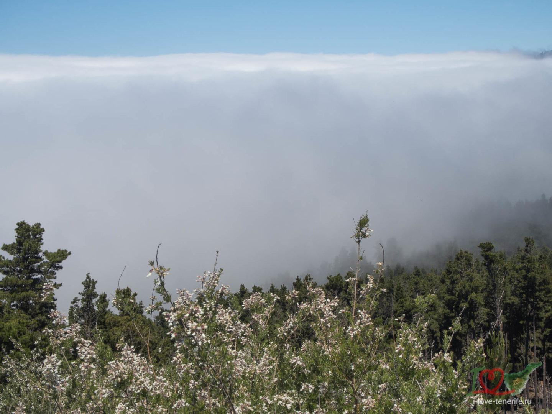 погода на Тенерифе в горах